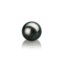 7-8mm AAA-Qualität Japanische Akoya Einzelne Perlen in Schwarz